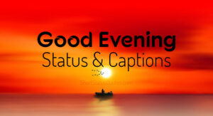 Good Evening Status, Captions and Good Evening Wishes