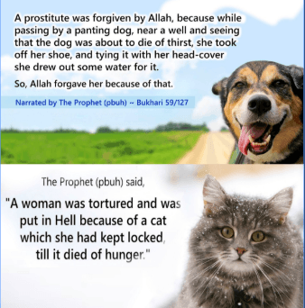 Islamic Quotes on Kindness (2)