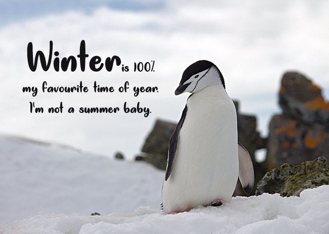 Funny Winter Captions
